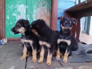 Жителю Шигонского района подбросили сразу 16 щенков