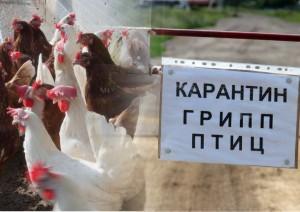 Виктор Кудряшов провел внеочередное заседание чрезвычайной областной противоэпизоотической комиссии.