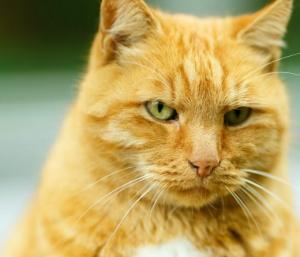 Кот принял порцию лекарств, поел и потихоньку приходит в себя.