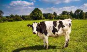 В Новокуйбышевске расследовали дело об убийстве коров из арбалета
