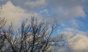 Из-за сильного ветра в Самарской области объявили желтый уровень опасности