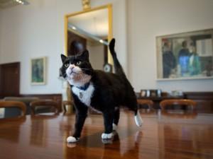 Сотрудникам британского МИДа официально запретили подкармливать местного кота