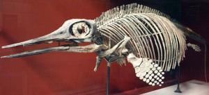 Найденные в Сызрани останки ихтиозавра признали уникальными