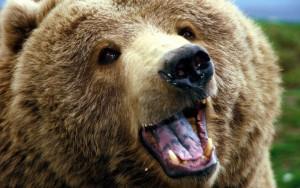 В Самаре прооперируют медведя, найденного на автостоянке  Городские и областные власти взяли животных под патронаж.