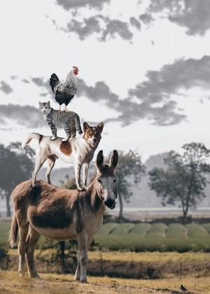 В котором могут принимать участие животные, обладающие не только специальными трюковыми навыками, но и любыми удивительными, необычными природными способностями.