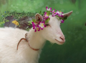 В Самаре создадут анимированный прототип козы Забияки