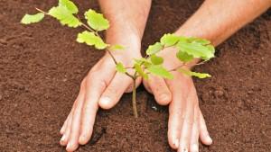 Футбольные болельщики смогут посадить дерево