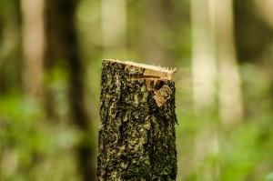 Пресечена незаконная рубка леса в Шигонском районе