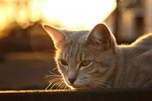 Четверть путешественников признались, что лучший отпуск осенью — это отдых дома с котом